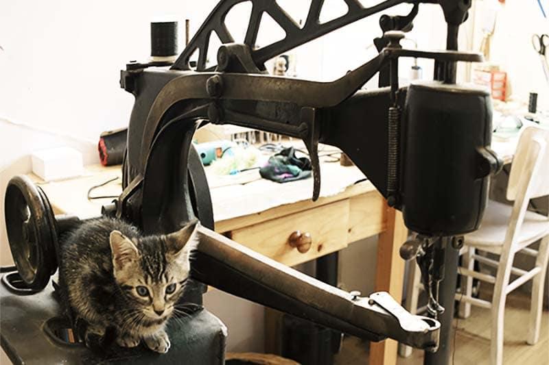 Chat sur une machine à coudre PFAFF mécanique de cordonerie